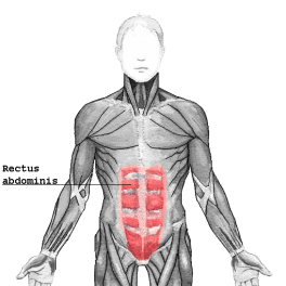 do-crunches-work-for-abs-rectus-abdominis